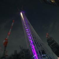 紫色を纏う - 東京スカイツリー